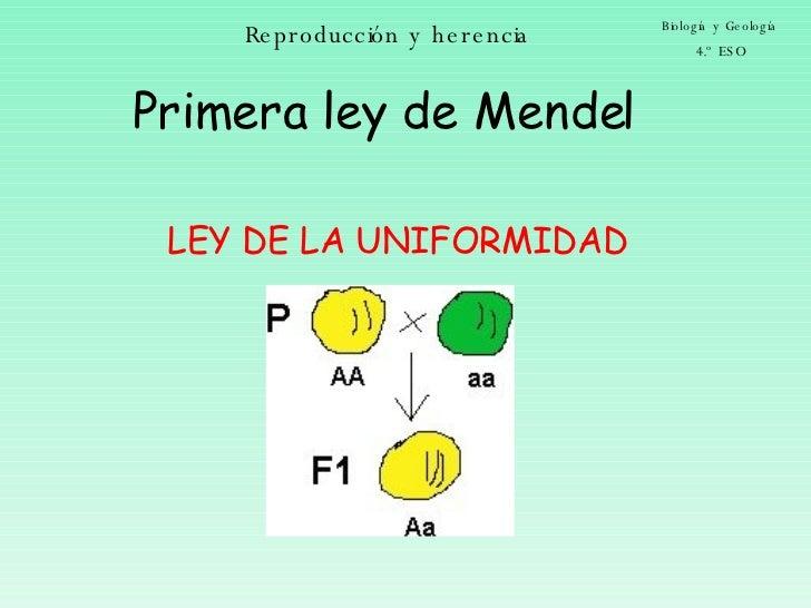 Reproducción y herencia Biología y Geología 4.º ESO Primera ley de Mendel LEY DE LA UNIFORMIDAD
