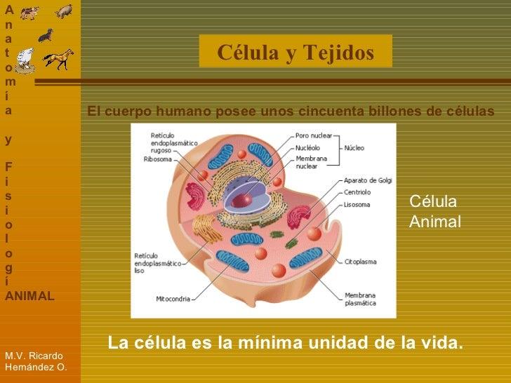 Unidad 1 Conceptos Basicos de Anatomia y Fisiologia Animal