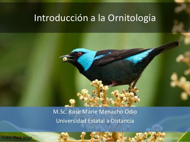 Introducción a la Ornitología M.Sc. Rose Marie Menacho Odio Universidad Estatal a Distancia Foto: Raul Vega