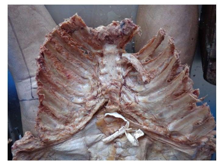 Primera clase del curso de instructores de anatomía
