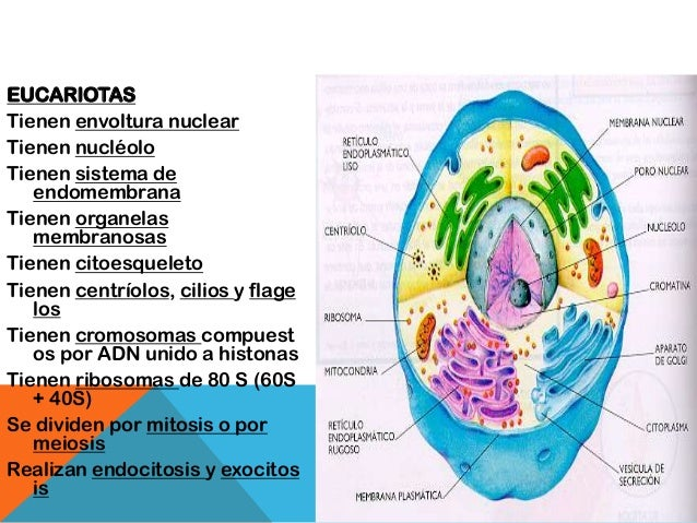 Sistema celular biologia
