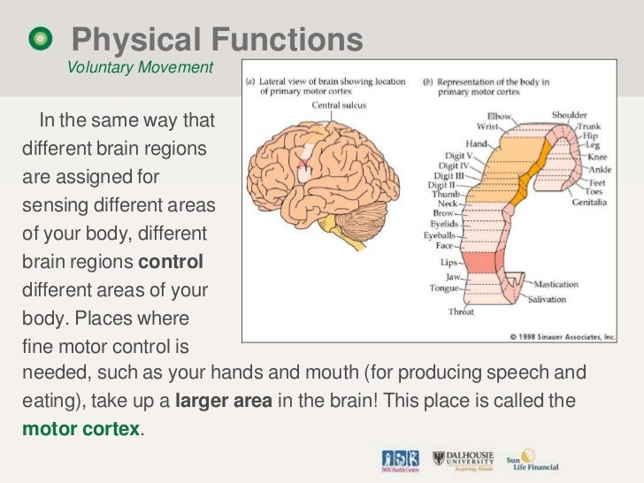 Primer on the brain revised