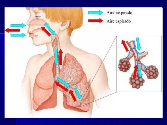 El tratamiento del depósito de las sales en sheynom la columna vertebral