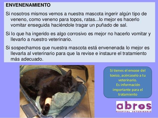 Primeros auxilios en mascotas - El mejor veneno para ratones ...
