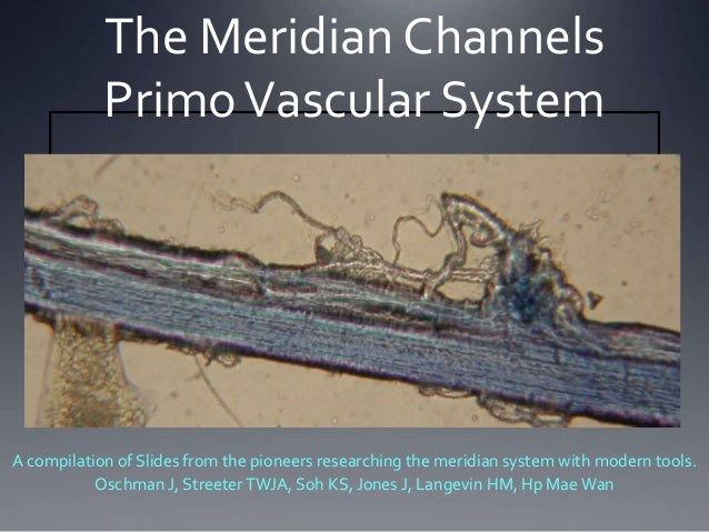 The Meridian Channels PrimoVascular System A compilation of Slides from the pioneers researching the meridian system with ...