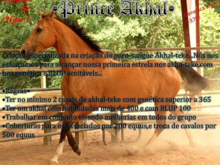 Beija-flor     &Nyna :)Criação especializada na criação do puro-sangue Akhal-teke...Nós nosesforçamos para alcançar nossa ...