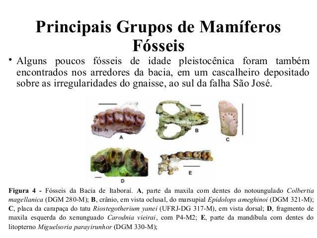 Principais Grupos de Mamíferos  Fósseis  • Alguns poucos fósseis de idade pleistocênica foram também  encontrados nos arre...