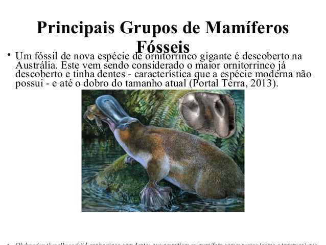 Principais Grupos de Mamíferos  Fósseis • Um fóssil de nova espécie de ornitorrinco gigante é descoberto na  Austrália. Es...