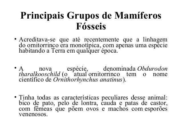 Principais Grupos de Mamíferos  Fósseis  • Acreditava-se que até recentemente que a linhagem  do ornitorrinco era monotípi...