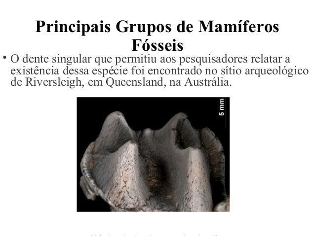Principais Grupos de Mamíferos  Fósseis  • O dente singular que permitiu aos pesquisadores relatar a  existência dessa esp...