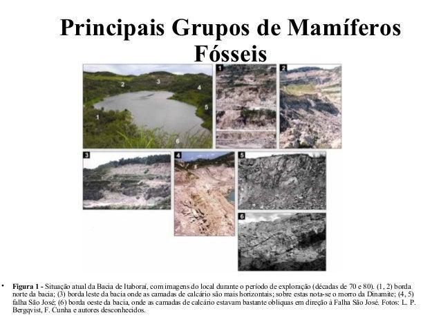 Principais Grupos de Mamíferos  Fósseis  • Figura 1 - Situação atual da Bacia de Itaboraí, com imagens do local durante o ...