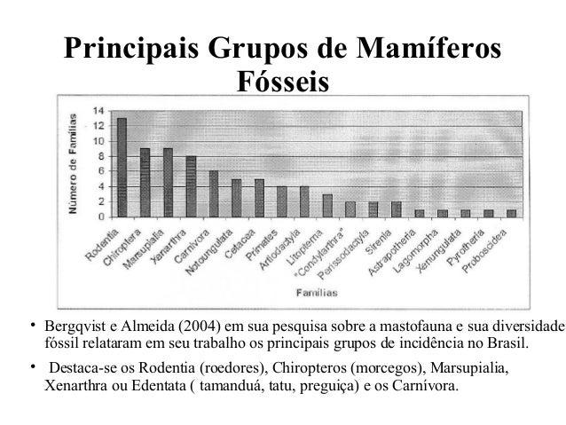 Principais Grupos de Mamíferos  Fósseis  • Bergqvist e Almeida (2004) em sua pesquisa sobre a mastofauna e sua diversidade...