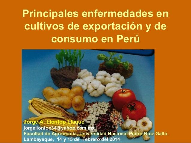 Principales enfermedades en cultivos de exportación y de consumo en Perú Jorge A. Llontop Llaque jorgellontop34@yahoo.com....