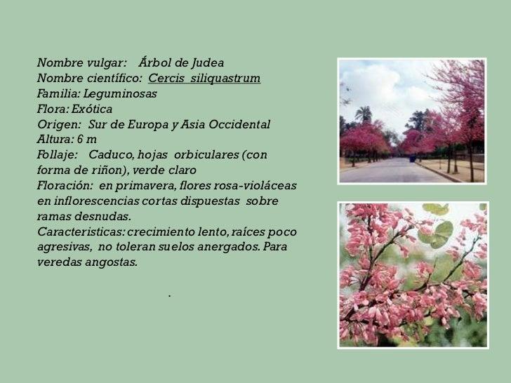Principales especies de rboles for Arboles perennes de crecimiento rapido en argentina