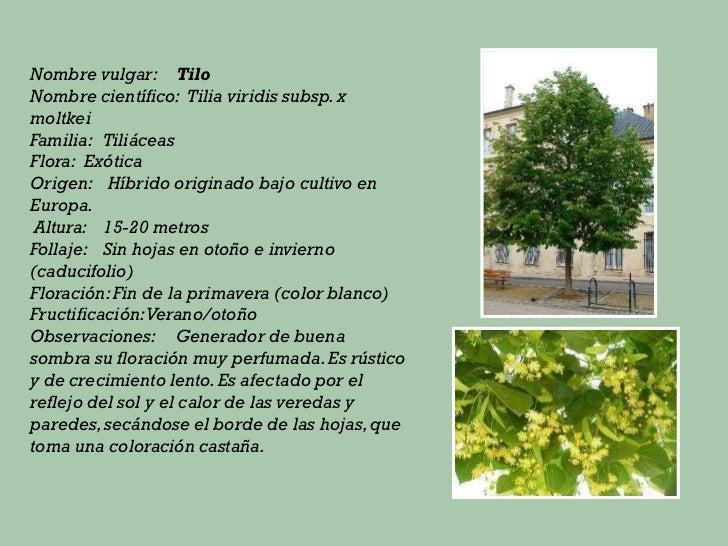 Principales especies de rboles for Tipos de arboles y sus caracteristicas