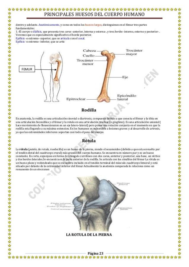 Excelente Dentro De Un Cuerpo Humano Foto - Anatomía de Las ...