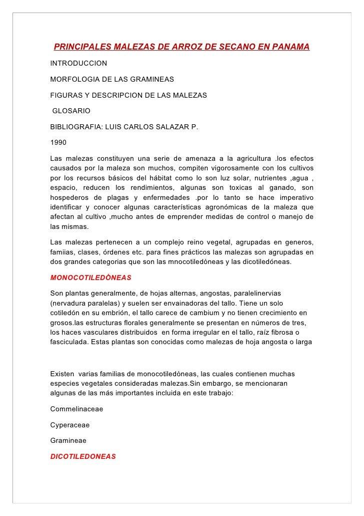 PRINCIPALES MALEZAS DE ARROZ DE SECANO EN PANAMA INTRODUCCION  MORFOLOGIA DE LAS GRAMINEAS  FIGURAS Y DESCRIPCION DE LAS M...