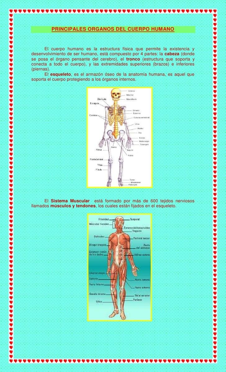 Principales organos del cuerpo humano