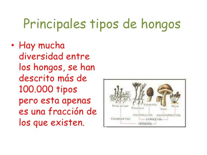 principales tipos de hongos On cuantos tipos de hongos existen