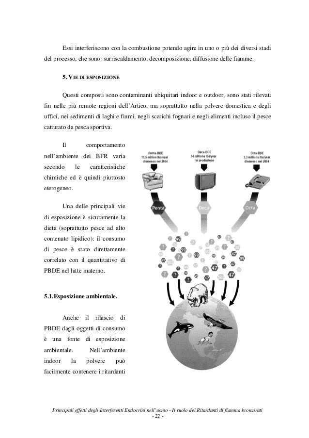 Principali effetti degli interferenti endocrini nell uomo il ruolo - La fiamma gemelli diversi ...