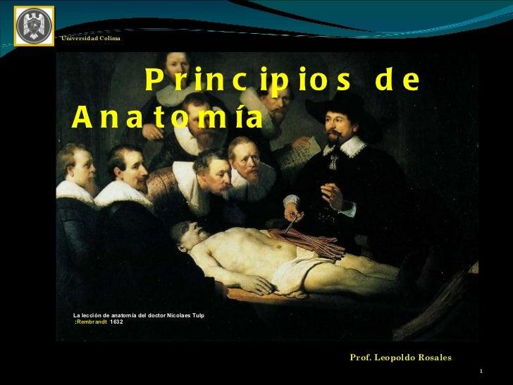 Prof. Leopoldo Rosales Universidad Colima Principios de Anatomía  La lección de anatomía del doctor Nicolaes Tulp : Rembr...