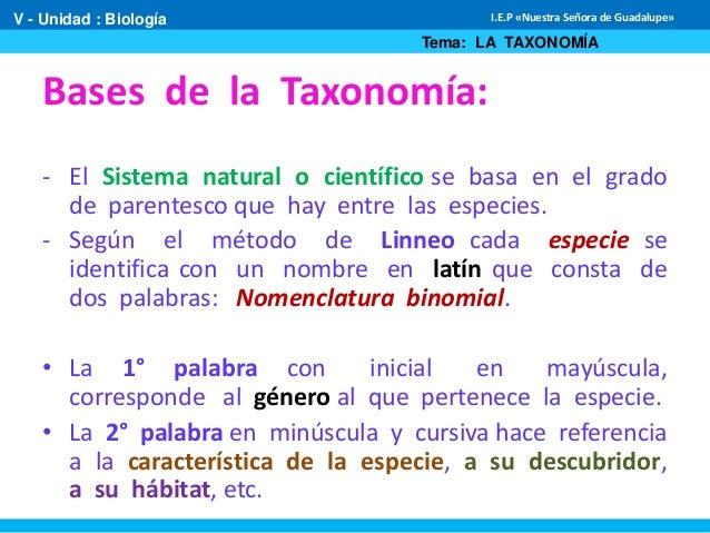 Principios de la taxonom a for Taxonomia de la jirafa