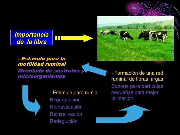 Importancia  de la fibra   - Estímulo para la  motilidad ruminal  Mezclado de sustratos y               - Formación de una...