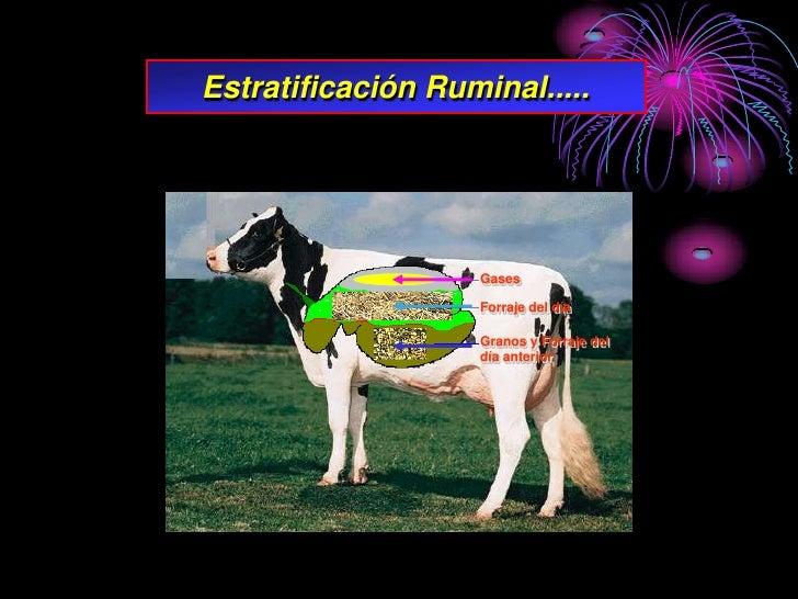 Estratificación Ruminal.....                         Gases                      Forraje del día                      Grano...
