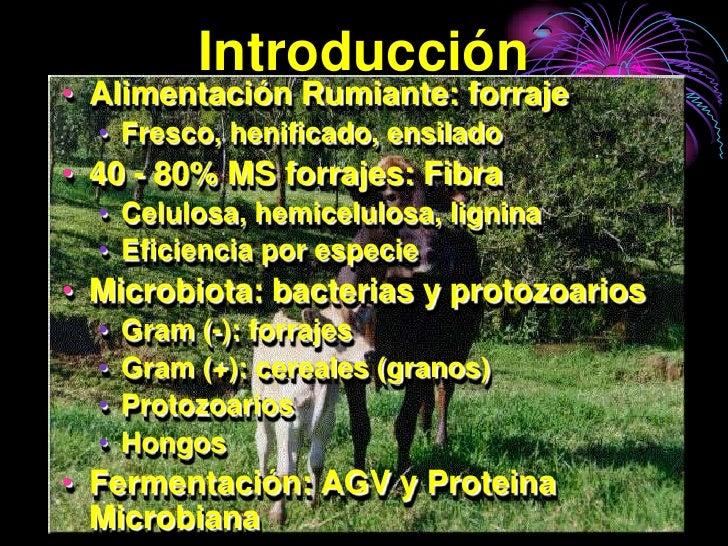 Introducción • Alimentación Rumiante: forraje   • Fresco, henificado, ensilado • 40 - 80% MS forrajes: Fibra   • Celulosa,...