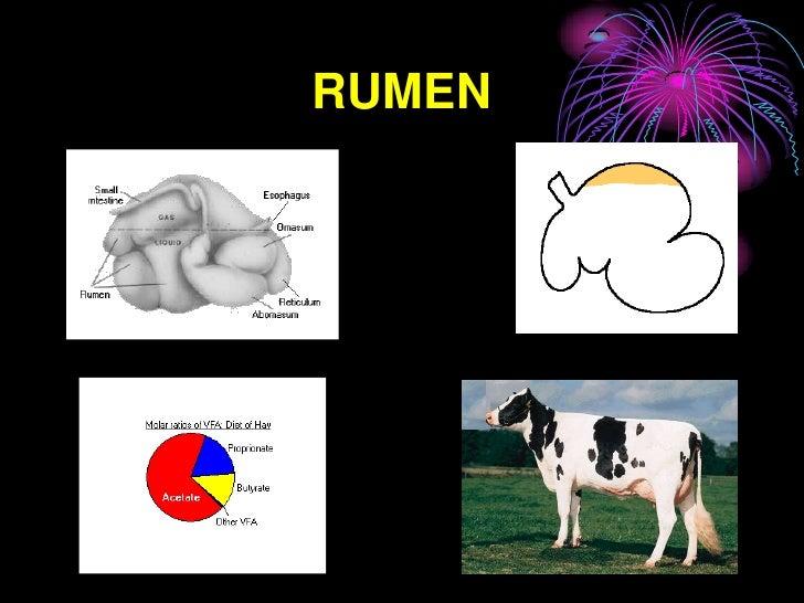 RUMEN