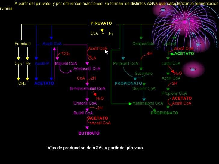 A partir del piruvato, y por diferentes reacciones, se forman los distintos AGVs que caracterizan la fermentación ruminal....