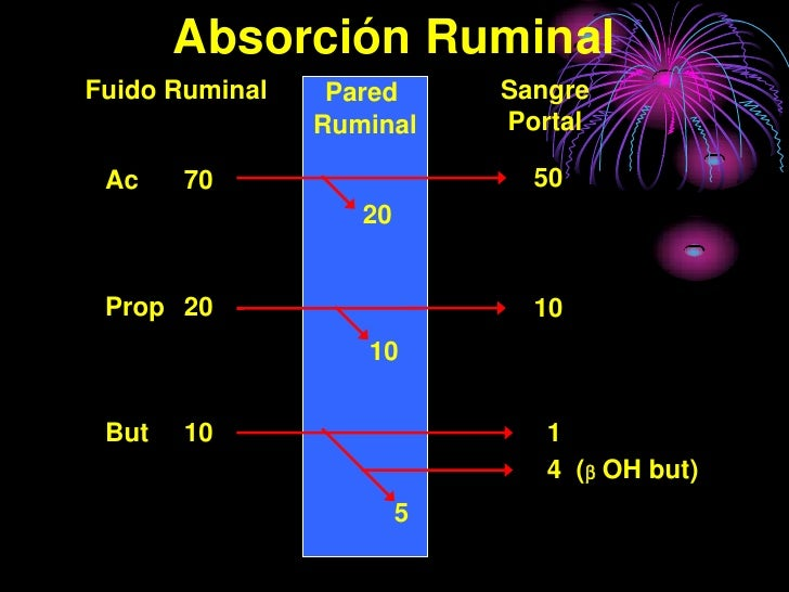 Absorción Ruminal Fuido Ruminal    Pared      Sangre                 Ruminal     Portal   Ac    70                     50 ...