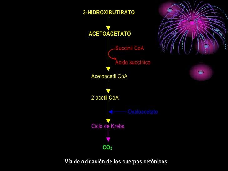 3-HIDROXIBUTIRATO            ACETOACETATO                       Succinil CoA                       Ácido succínico        ...