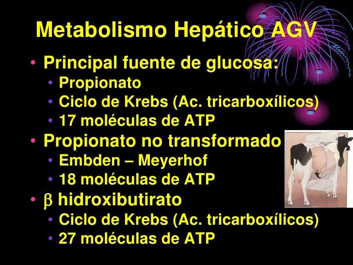Metabolismo Hepático AGV • Principal fuente de glucosa:   • Propionato   • Ciclo de Krebs (Ac. tricarboxílicos)   • 17 mol...