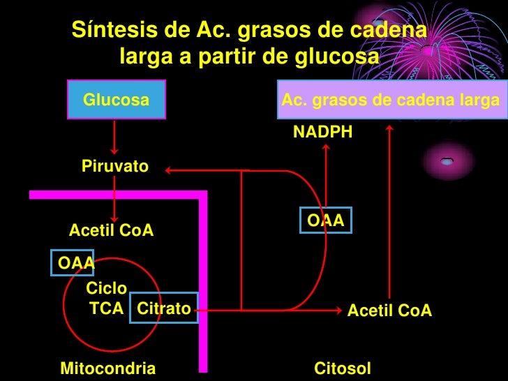 Síntesis de Ac. grasos de cadena      larga a partir de glucosa   Glucosa          Ac. grasos de cadena larga             ...