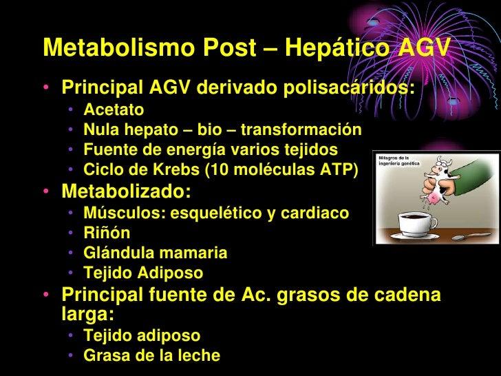 Metabolismo Post – Hepático AGV • Principal AGV derivado polisacáridos:   •   Acetato   •   Nula hepato – bio – transforma...
