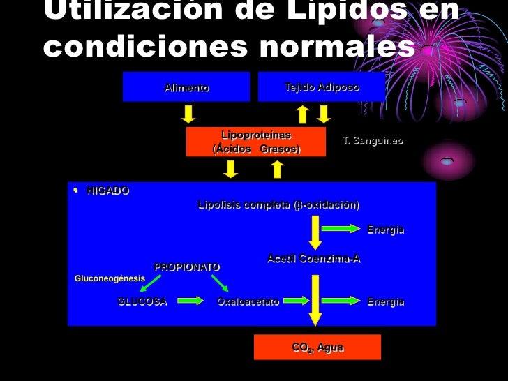 Utilización de Lípidos en condiciones normales                     Alimento                  Tejido Adiposo               ...