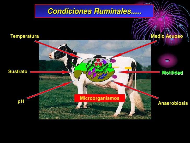Condiciones Ruminales.....   Temperatura                                Medio Acuoso     Sustrato                         ...