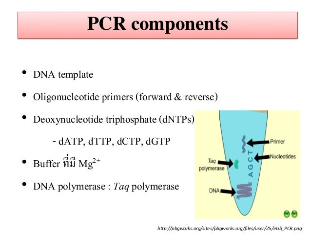 pcr template amount - principle of pcr