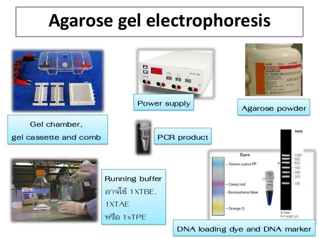 gel electrophoresis chamber