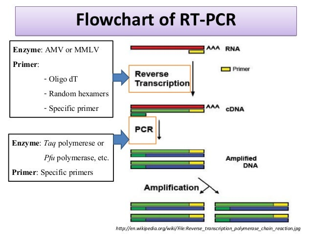 pcr protocols a guide to methods and applications