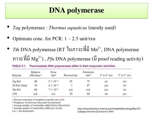 taq polymerase sythesis Taq dna polymerase is a thermostable dna polymerase that catalyzes 5'→3'  synthesis of dna, has zero detectable 3'→5' exonuclease (proofreading) activity .