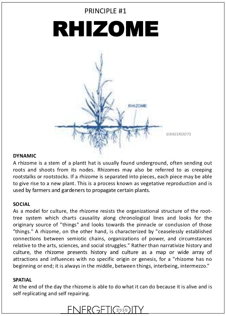 PRINCIPLE #1                 RHIZOME                                                                     GRASSROOTSDYNAMIC...