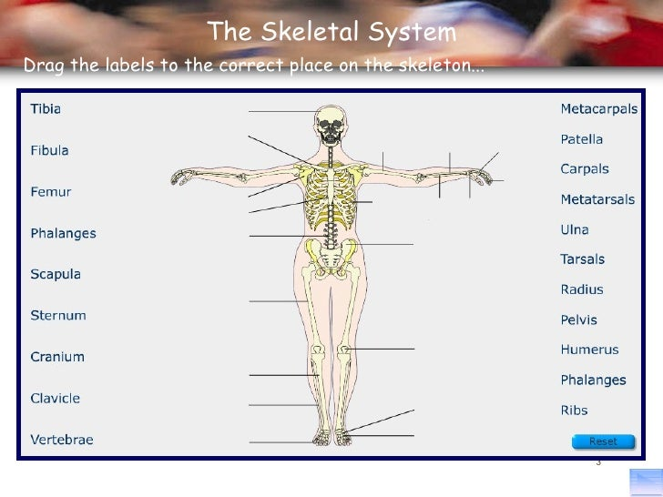 Principles Of A P 1112 Session 2 Skeletal System Functions Of