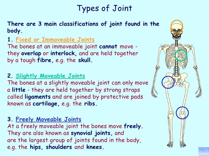 Principles of a+p 1112 session 5 - joints (structure)