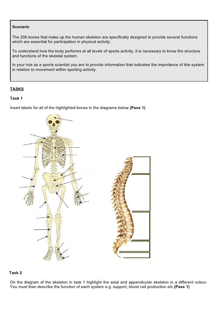 Principles Of Ap In Sport 1112 Ass 1 Skeletal System