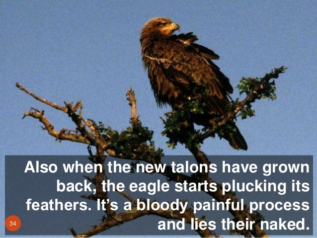Image result for The Eagle & The Monk 7 principles of successful change