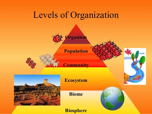 relationship between ecosystem and biomes