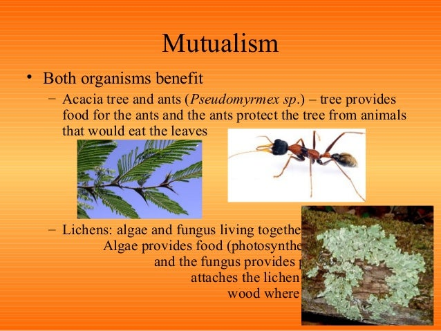 acacia ants and trees relationship counseling