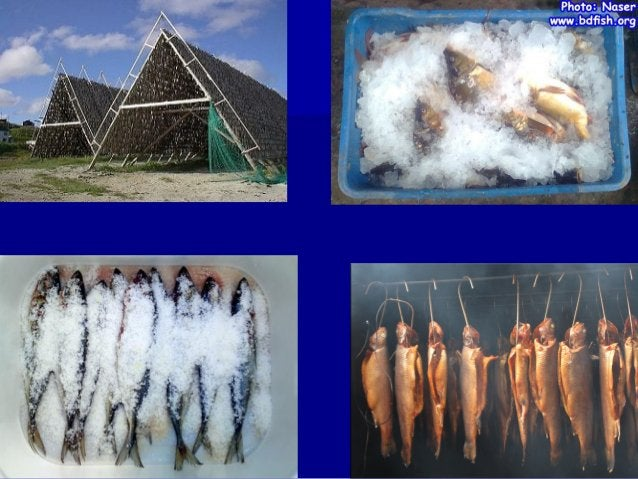  FISH  PRESERVATION  Preservation of fish is done to prevent spoilage.  Since fish is very perishable, it is therefore,...